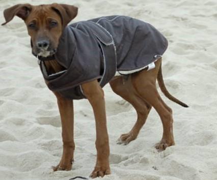 Nero mit Mantel auf Sylt
