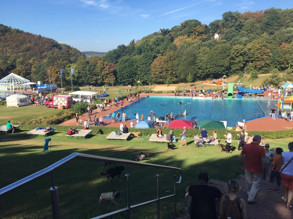 Hundeschwimmen im Freibad Hagen